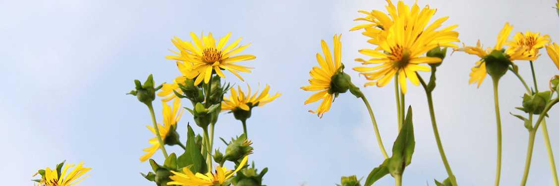 daisy-slider